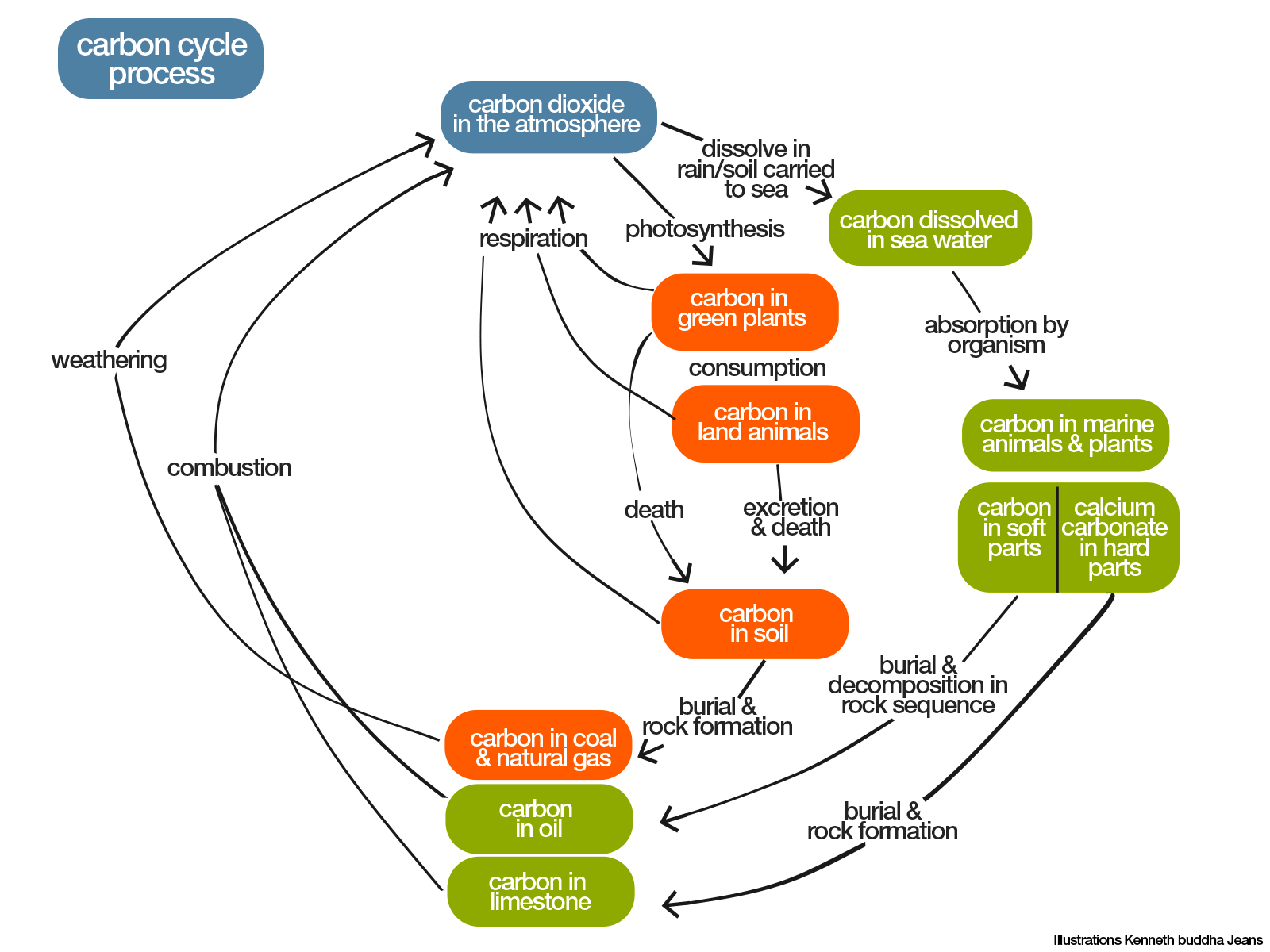 Carbon cycle process overview ccuart Choice Image