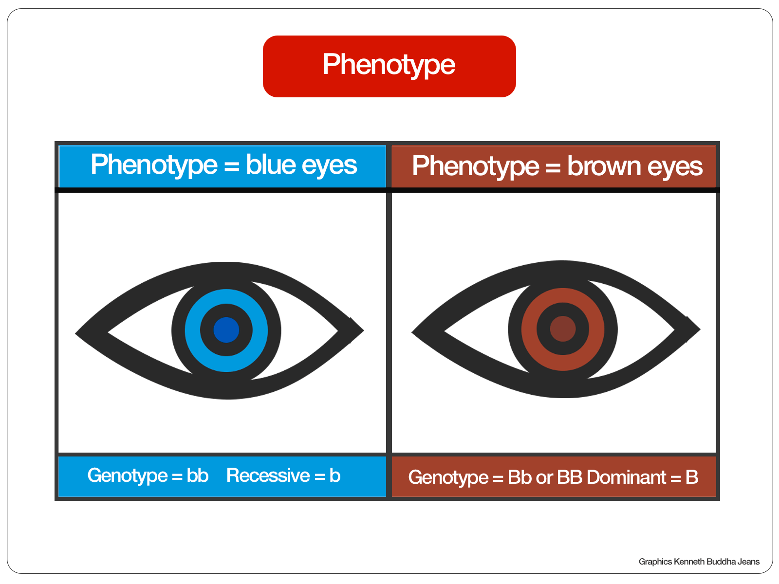 Phenotype Illustration
